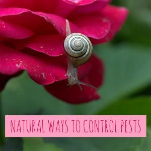Let's talk for a minute about natural ways to control pests. . .