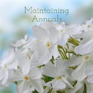 Let's talk for a minute about maintaining annuals. . . .