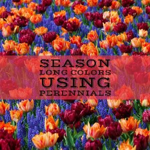 Let's talk for a minute about season-long color using perennials. . .
