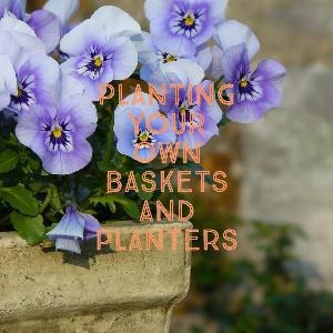 Let's talk for a minute about planting your own baskets and planters. . .