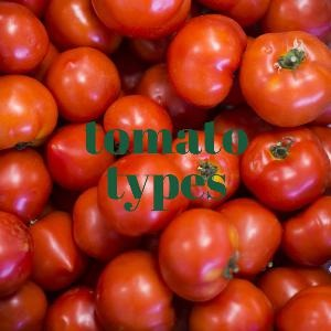 Let's talk for a minute about tomato types. . .