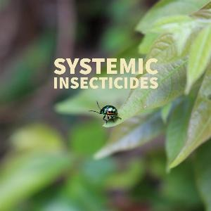 Let's talk for a minute about systemic insecticides. . .