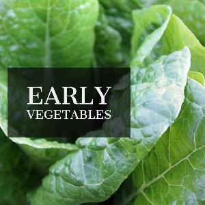 Let's talk for a minute about early vegetables. . .
