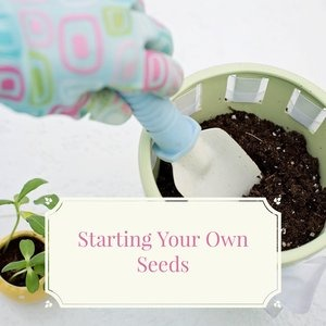 Let's talk for a minute about starting your own seeds. . .