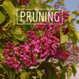 Let's talk for a minute about pruning. . .